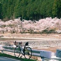 花見サイクリング