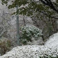 3月29日・・・春の雪です