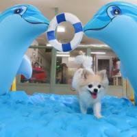 アロハドギー夏季休暇のご案内(*^-^*)  犬のしつけ教室@アロハドギー
