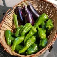 秋の家庭菜園からの野菜たち