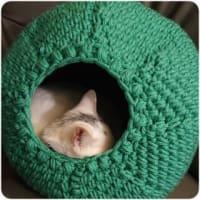 キャットドームを編む。