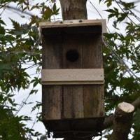 昨日、四十雀用のリフォーム巣箱を設置