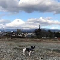 昨日の雨で富士山は真っ白に