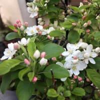 夕方の花たち