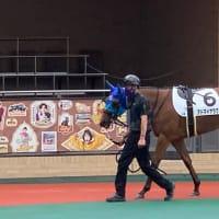 【現地写真】ナミュール 新馬戦