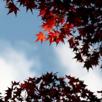 秋のひとこま