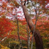 有馬温泉太閤さんのお気に入り瑞宝寺の紅葉  その2