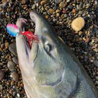 鮭釣り2戦目