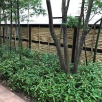竹垣の改修工事。