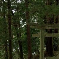 徹底的に森林浴