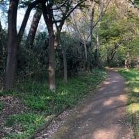 ジョギングの写真 (*´∀`)