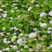 ** ありきたりの花の良さ **