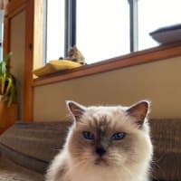 高齢ネコとの暮らし