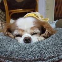 介護疲れで娘をアヤメタ88歳の母心&プリンの現在&嫌われて孤立してる波瑠