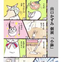 出口かずみ個展 「小鉢」 開催のお知らせ/2019年6月29日~7月23日