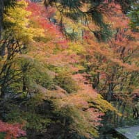 「白龍園」の緑の苔と色づいた楓が織りなす秋の景色。庭を守る人たちの心が育む美しさ