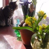花を食す!