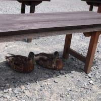 掛川で鳥と戯れる