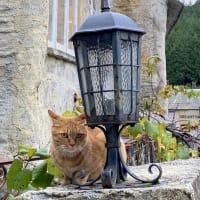 ドゥリムトン村の猫ちゃんたち・・by にゃぁ~にゃぁ~の日
