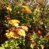 秋の花盛り