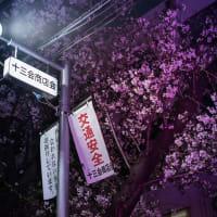【Mar_27】小山台高校の桜