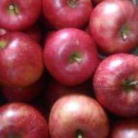 季節酵母焼き菓子『りんご酵母の寄り道アップルパイ』販売を開始します。どうぞよろしくお願いいたします。