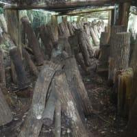 シイタケ原木いれる