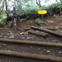今年最高の炎暑日に何となく山頂まで登った丹沢;塔ノ岳(2019年第24回目)