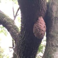 非日常キャンプとスズメバチの巣(横岳自然公園)