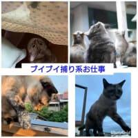 お猫のお仕事図鑑