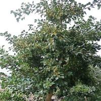 これは何の木??