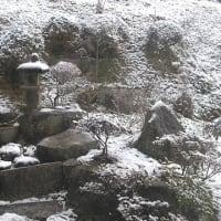 朝起きると、庭に雪が!