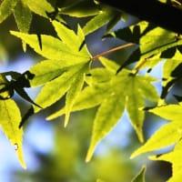 秋のきらめき‥③