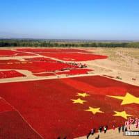 赤く覆われたゴビ砂漠を見ようと地元の人々が訪れている。同地では、こうした特殊なスタイルで豊作を祝い、国慶節(建国記念日、10月1日)の到来を祝っている。