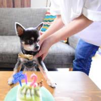 今日はとらの12歳の誕生日♪