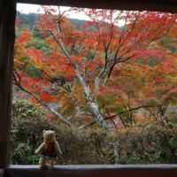 ますます深まる紅葉、鞍馬二ノ瀬の「白龍園」。今年の美しさは格別