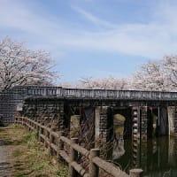 新潟にも春が来たよ
