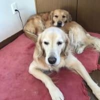 お蘭ちゃんを枕にするココ太郎とゴロスリエルさん
