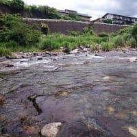 狩野川、厳しい釣りを強いられる。