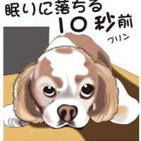 深田恭子がスッポンポンになったのね&愛犬を手放す決意は悲しい