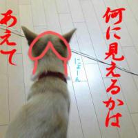 ワイセツ物チン列犬