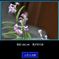 花写真鑑にフルサイズ写真の追加 (No 2047)