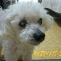 今日も真夏日の東京…(;´▽`A``  明日からは秋かな? 気になるのは台風16号