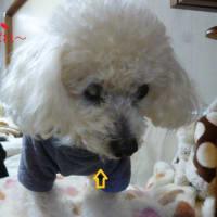今日はお腹の調子が悪い老犬ラスさん…( ̄へ ̄|||) ウーム