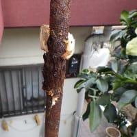 凍結で水道修理・・・千葉市
