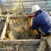 自然菜園スクール『自然育苗タネ採り集中コース』案内