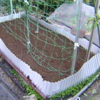 実豌豆(グリンピース)第2弾、畝作りと定植