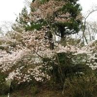 3月28日 西舞鶴散歩