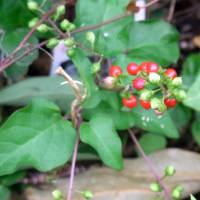エリア1の花と実と葉
