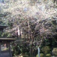 春♪ 見~つけた